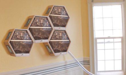 Μια εταιρία δημιουργεί σπιτικές κυψέλες, για την ενίσχυση του πληθυσμού των μελισσών
