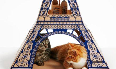 Η γάτα σας θα μπορούσε να έχει για σπίτι τον Πύργο του Άιφελ, το Taj Mahal, ακόμη και  τον Λευκό Οίκο!
