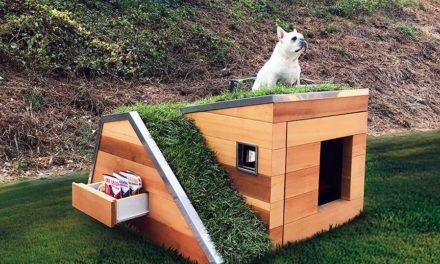 Ένα σπιτάκι για σκύλους φιλικό προς το περιβάλλον