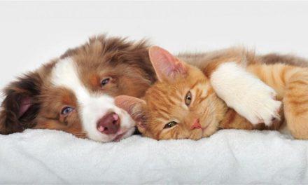 Τέλος στην πώληση κατοικίδιων στα pet shops βάζει η βρετανική κυβέρνηση