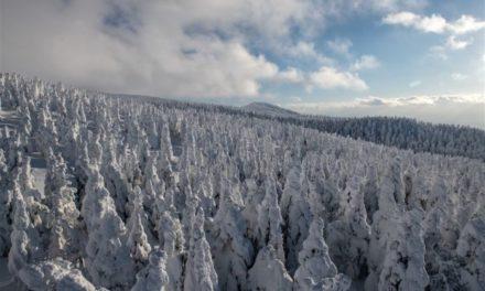 Το πιο όμορφο παγωμένο δάσος του κόσμου