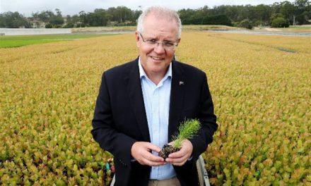 Η Αυστραλία θα φυτέψει ένα δισεκατομμύριο δέντρα για να αναστρέψει την κλιματική αλλαγή