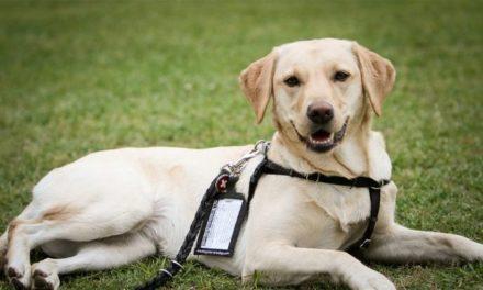 Σκύλοι βοηθοί στην υπηρεσία ατόμων με άνοια ή Alzheimer στη Θεσσαλονίκη
