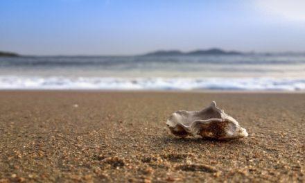 Η Ε.Ε. διοργανώνει παγκόσμιο καθαρισμό παραλιών