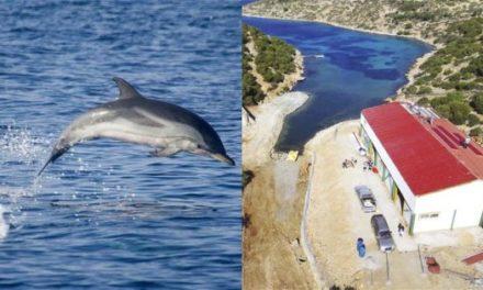 Στους Λειψούς το πρώτο στον κόσμο καταφύγιο απελευθέρωσης αιχμάλωτων δελφινιών