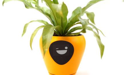 Έξυπνες γλάστρες σου δείχνουν πώς αισθάνεται ανά πάσα στιγμή το φυτό σου