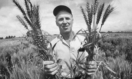 Norman Ernest Borlaug : Ο άνδρας που έσωσε τον κόσμο από την πείνα
