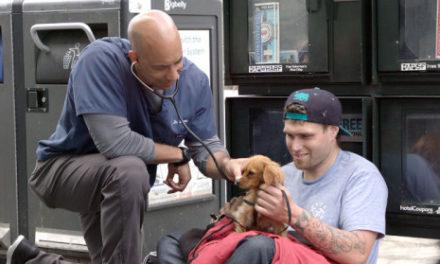 Στιούαρτ Κουάν : Ένας κτηνίατρος του δρόμου που φροντίζει τα ζώα των αστέγων