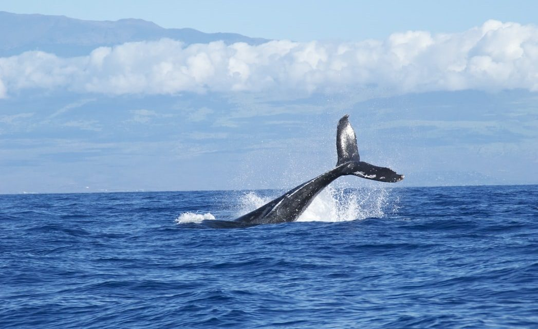 Φάλαινες απολαμβάνουν τη Μεσόγειο χωρίς πλοία – Σπάνια εμφάνιση στις ακτές της Μασσαλίας (video)