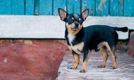 ΗΠΑ: Σκυλίτσα έσωσε το «αφεντικό» της που έπαθε εγκεφαλικό
