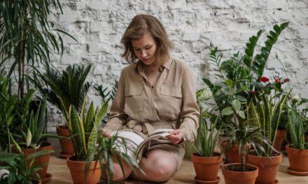 Αυτά τα πέντε φυτά εσωτερικού χώρου καθαρίζουν την ατμόσφαιρα στο σπίτι σας