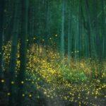 Φωτογράφος αποτύπωσε ένα δάσος φωτισμένο από πυγολαμπίδες και οι εικόνες είναι μαγικές