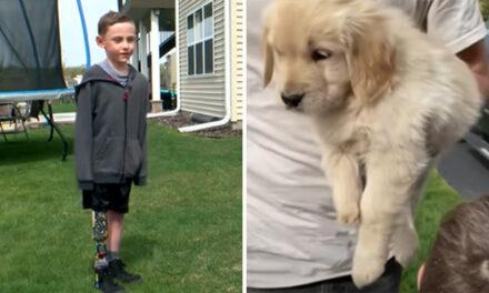 Ένα κουτάβι που γεννήθηκε χωρίς πόδι γίνεται η συντροφιά ενός μικρού αγοριού που ακρωτηριάστηκε