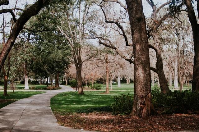 Έρευνα : Όσους περισσότερους χώρους πρασίνου έχει μία περιοχή τόσα λιγότερα είναι τα κρούσματα Covid-19
